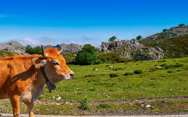 turismo activo asturias